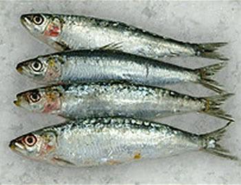Dried Sardine Fish products,Vietnam Dried Sardine Fish supplier